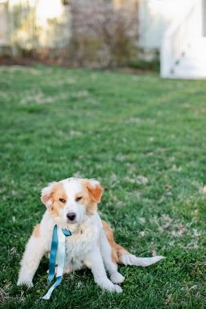 Dog with Ribbon Collar