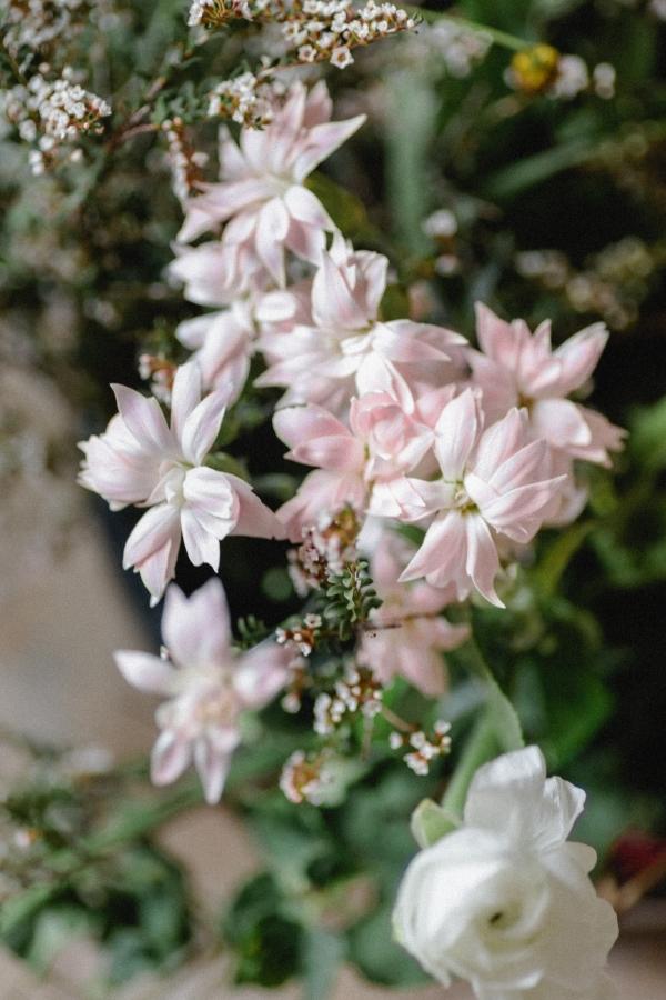 Flowering Pink Blooms on Branch