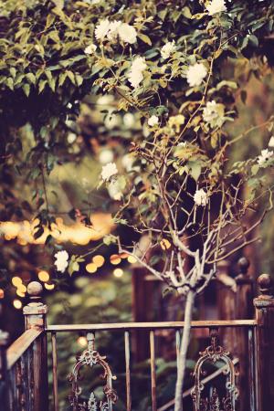 Foliage at Haiku Mill