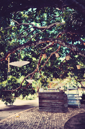 Parasols Hanging from Trees
