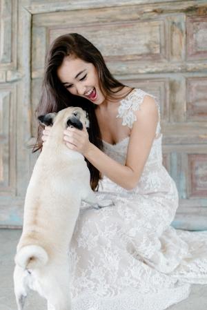 Pug With Bride
