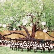 Tree for Wedding Ceremony