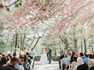 Ceremony Under Cherry Blossoms