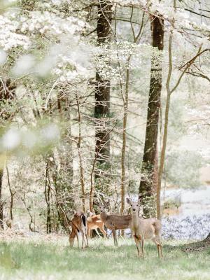 Deer at Wedding