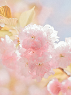Pastel Yellow and Pink Flowers