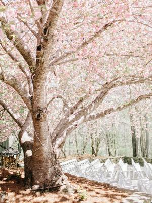 Wedding Ceremony Under Cherry Blossoms