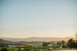 Chalk Hill Winery Wedding 15