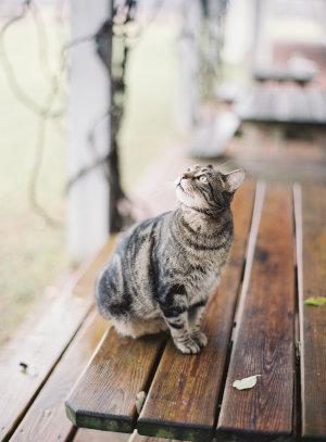 Cat at Wedding