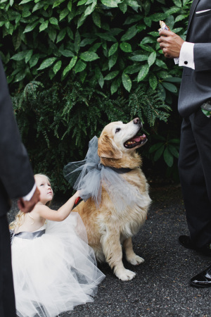 Dog in Tulle