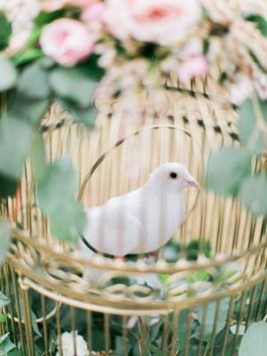 Dove in Birdcage