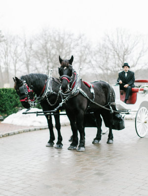 Horse and Carriage for Wedding