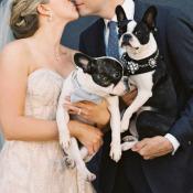 French Bulldogs In Wedding