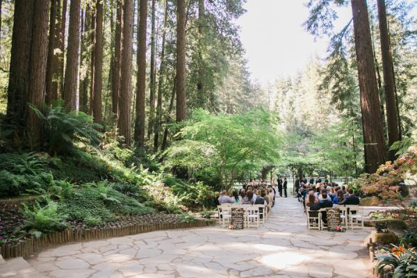 Wedding Ceremony Under Redwood Trees