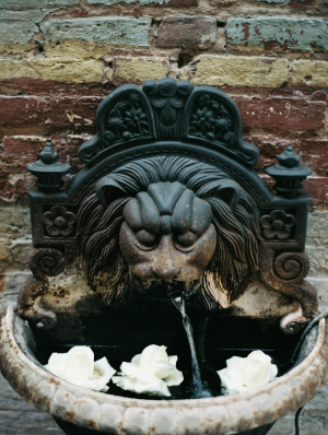Flowers in Garden Fountain