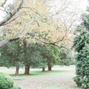 Virginia Fall Wedding Ideas 1
