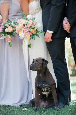 Adorable Labrador Retriever at Wedding