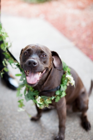 Dog with Floral Collar