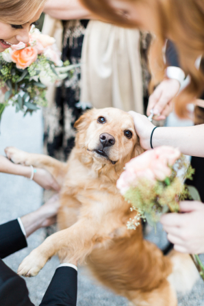 Golden Retriever in Wedding