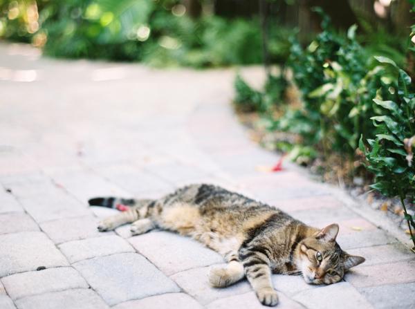 Cat at Hemingway Home