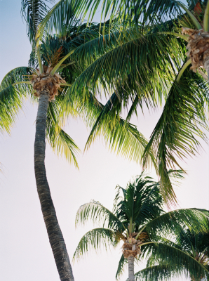 Key West Wedding Hemingway Home 1