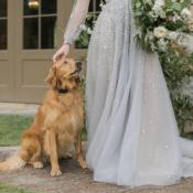 Golden Retriever at Wedding