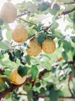 Vinewood Plantation Wedding Amy Arrington 2