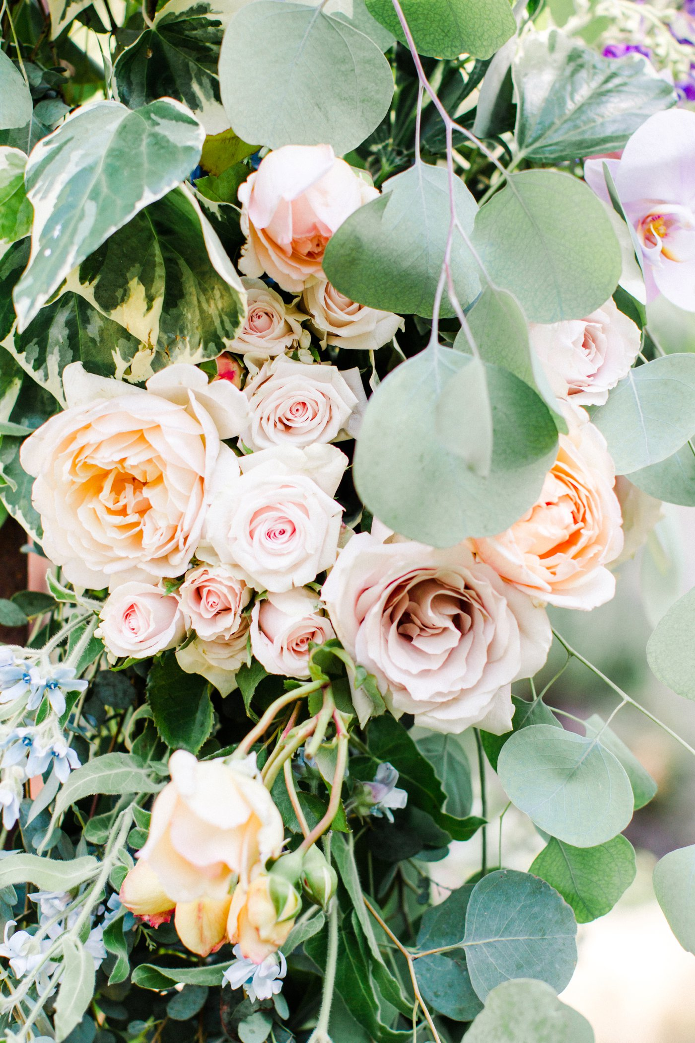 Wedding Canopy With Peach And Pink Flowers Elizabeth Anne Designs