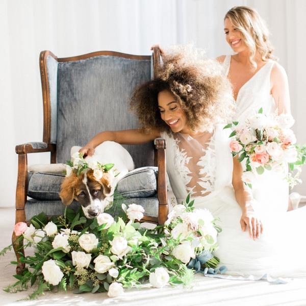 Saint Bernard Puppy in Wedding 4