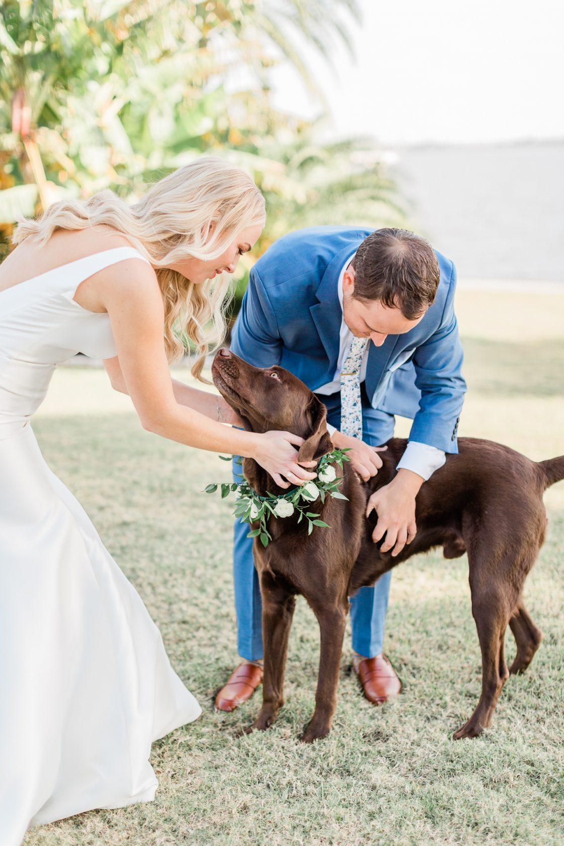 Chocolate Lab Wedding Dog