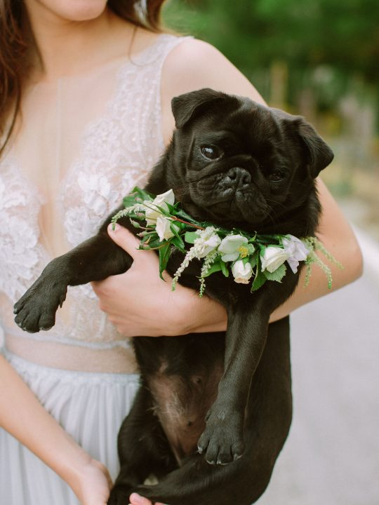 Floral Dog Wedding Collar