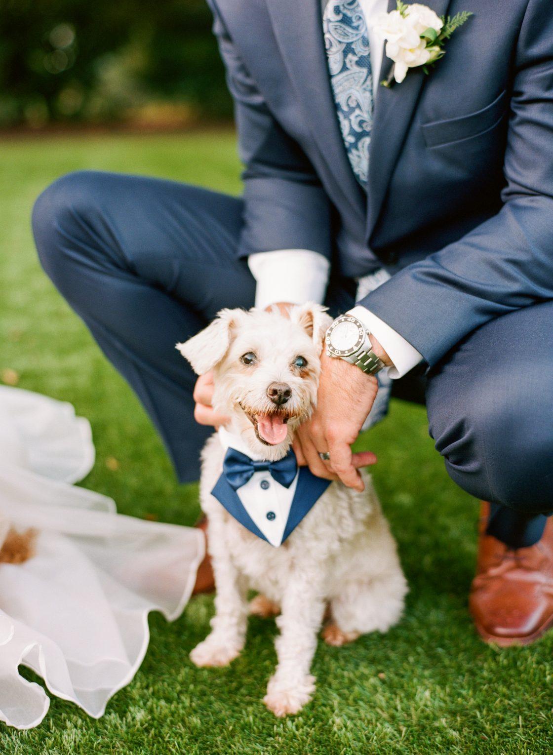 Wedding Ceremony Dog of Honor Ringbearer Puppy