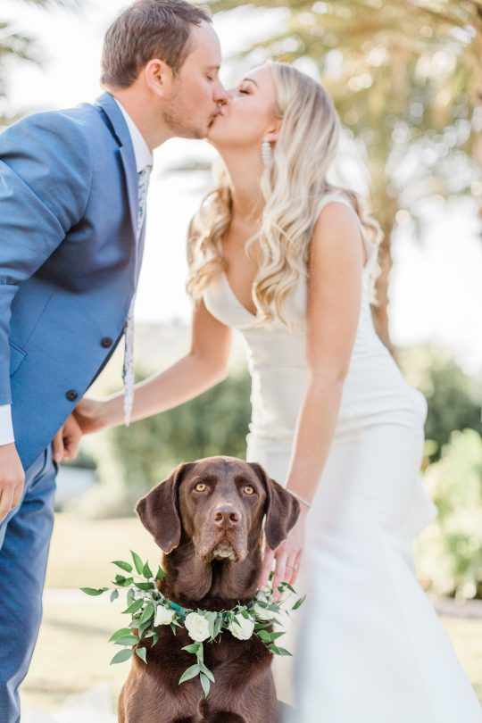Wedding Dog with Floral Collar