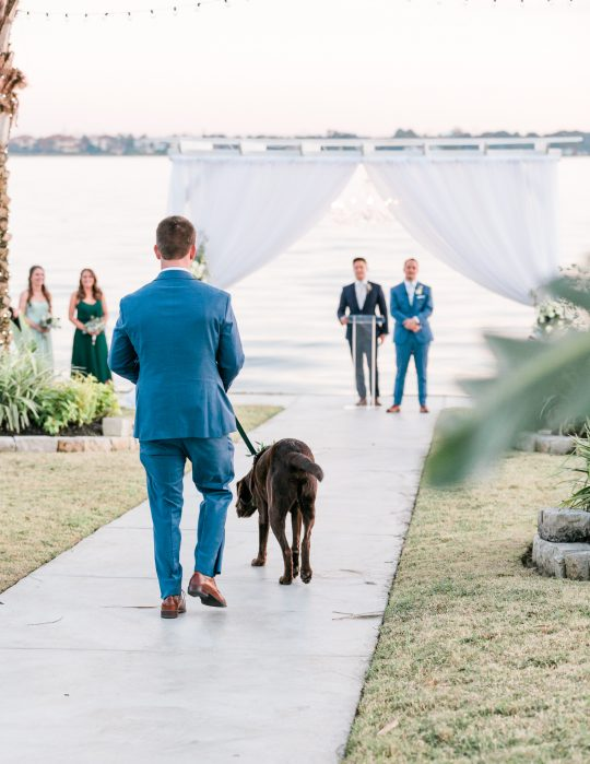 Wedding Groomsdog