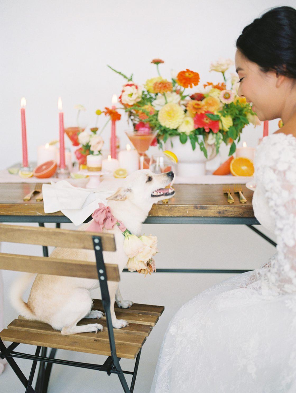 Dog Wedding Inspiration