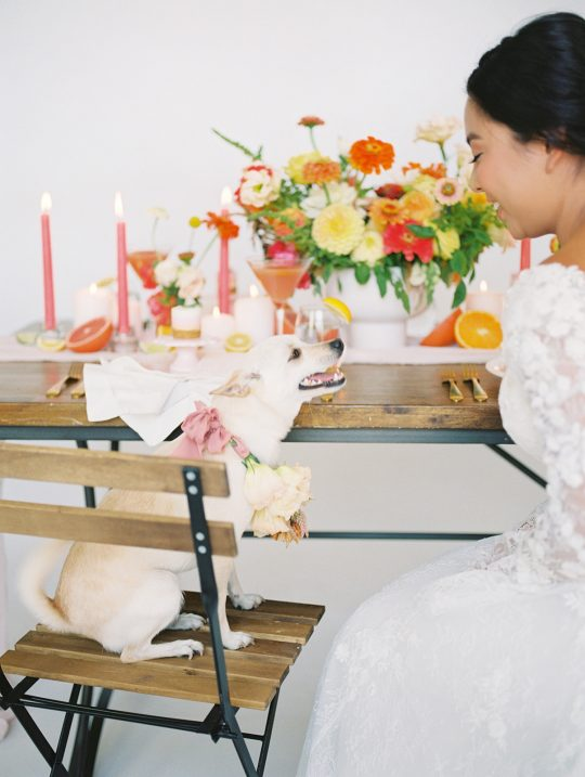 Dog Wedding Inspiration