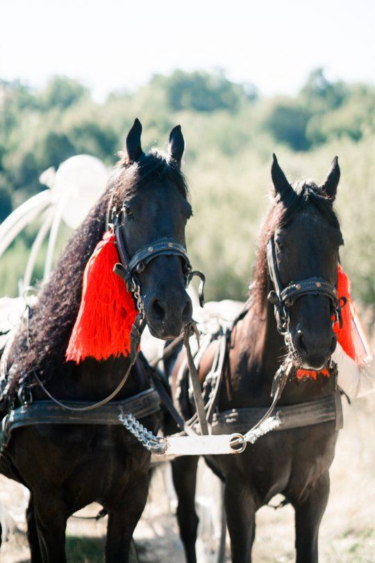 Horse Drawn Wedding Carriage